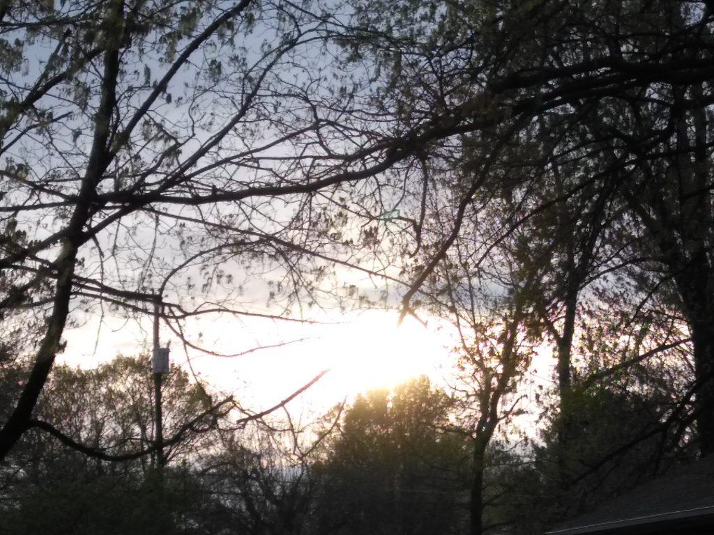 The setting sun as seen through branches