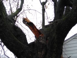 A broken rotting branch set in contrast against the color of wet bark